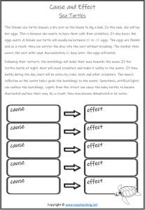 cause and effect sea turtles worksheet