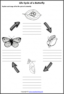 life cycle butterfly worksheets lifecycle worksheet
