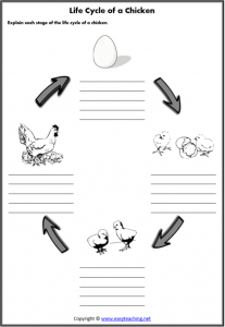 life cycle chicken worksheets lifecycle worksheet