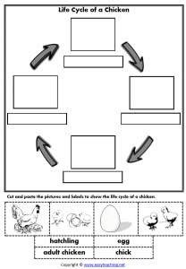 life cycle chicken worksheets cut paste lifecycle worksheet