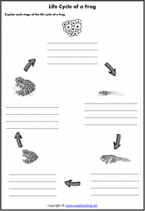 life cycle frog worksheets lifecycle worksheet