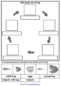 life cycle frog worksheets cut paste lifecycle worksheet