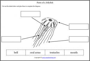 animal body parts worksheets jellyfish