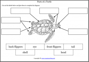 animal body parts worksheets turtle