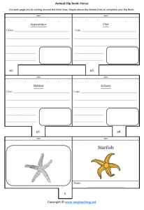 animal worksheets starfish flipbook diet habitat