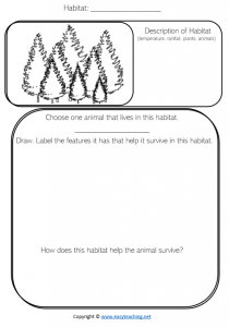 forest habitat science worksheet