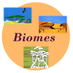 biome worksheets biomes