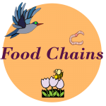 food chain web worksheets