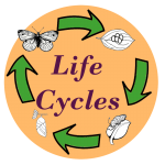 animal life cycle worksheets