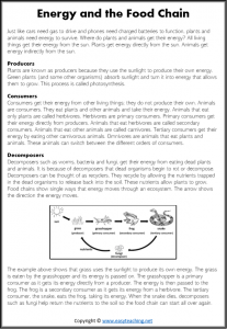 food chain information worksheet reading kids pdf