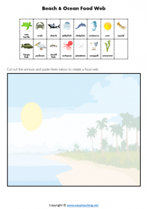 beach ocean marine food chain food web worksheet science pdf