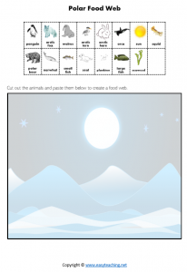 tundra polar food chain food web worksheet science pdf