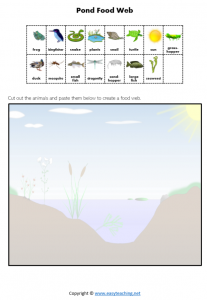 pond food chain food web worksheet science pdf