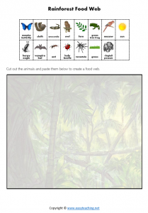 rainforest food chain food web worksheet science pdf