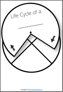life cycle spinner spin wheel pdf