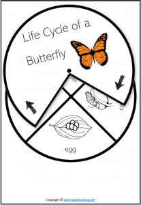 life cycle spinner wheel spin butterfly