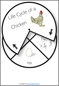 life cycle spinner wheel spin chicken