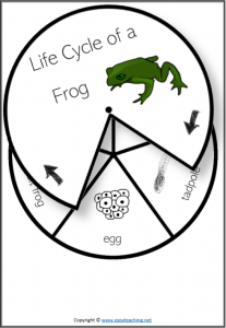 life cycle spinner wheel spin frog