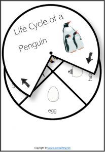 life cycle spinner wheel spin penguin
