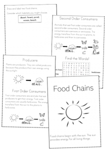 food chain folding booklet activity book pdf science kids